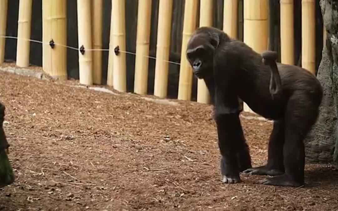 Customer story: Toronto Zoo